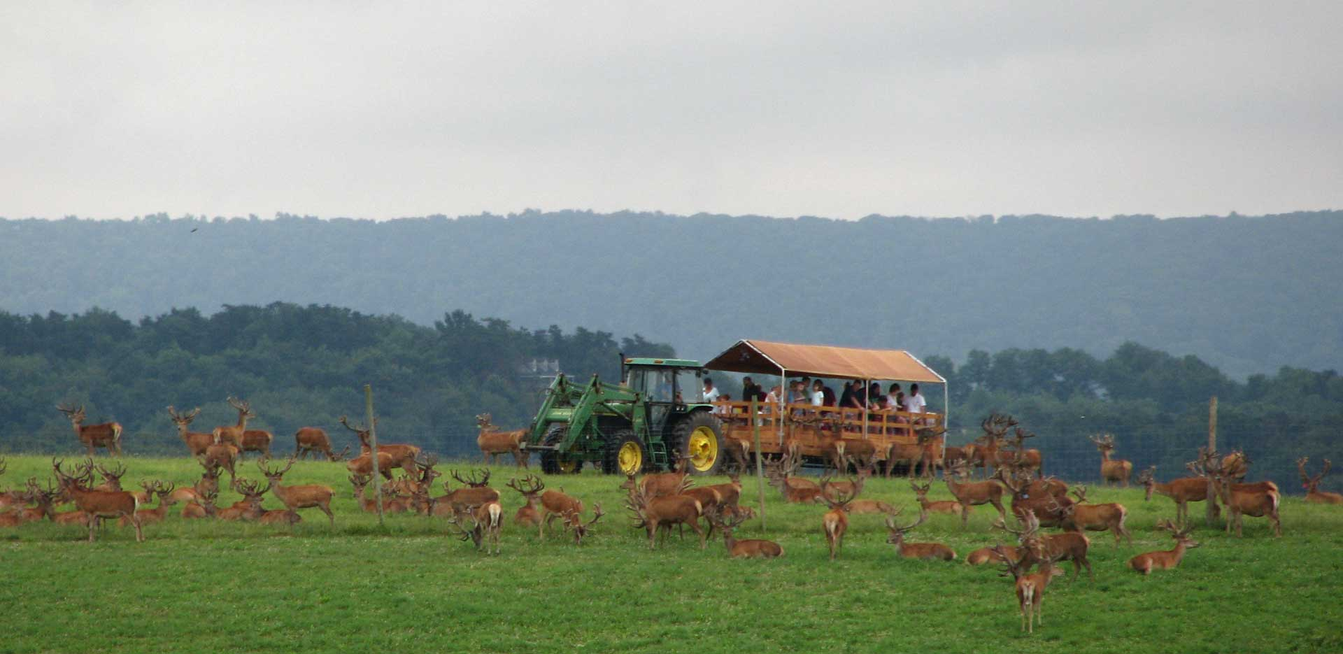 tours at rolling hills red deer farm